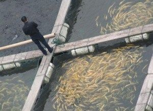 Raising Fish for Food: Backyard Fish Farming for Survival ...