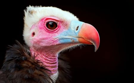 * - Birds Wallpaper ID 1565097 - Desktop Nexus Animals