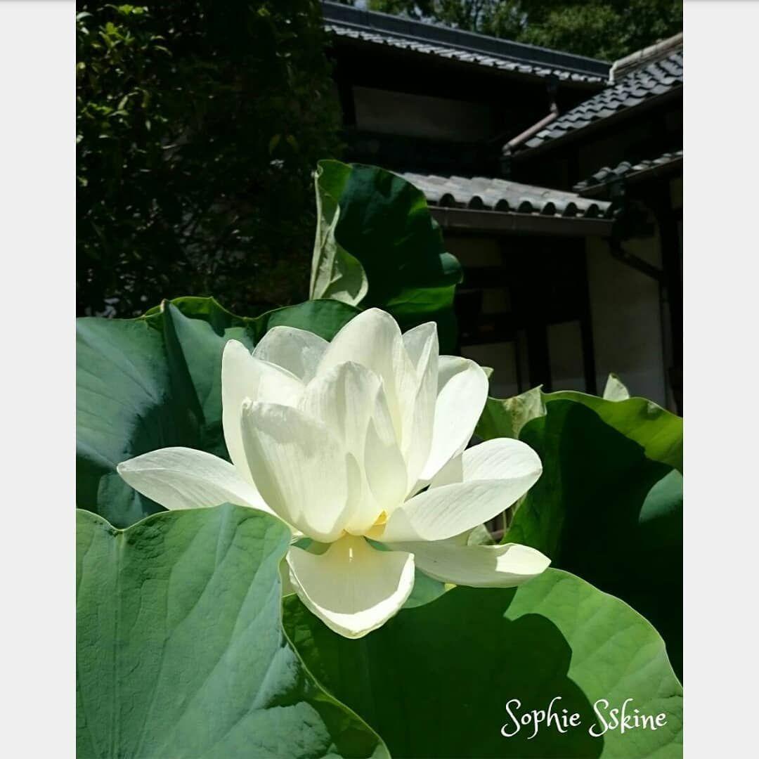 言葉 蓮花 倉木麻衣「花言葉」CM及MV中的京都景點