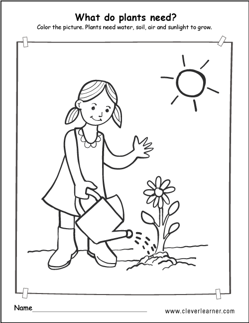 What do plants need to survive worksheets for preschools