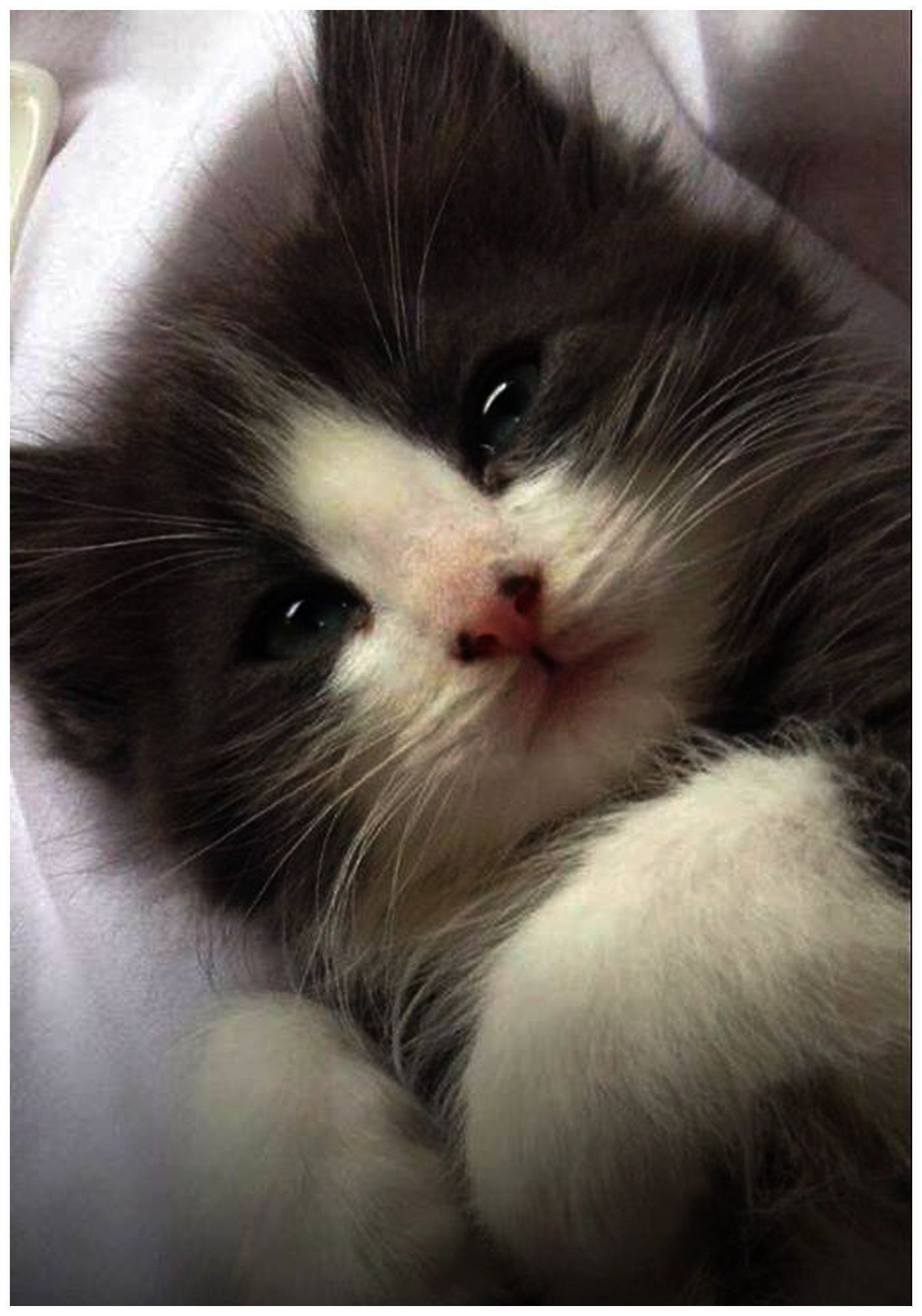 Cute Kitten Name Generator Outside Cute Italian Names For Kittens Cute Kittens Coloring Pages Provided Cute B Cats And Kittens Kittens Coloring Kittens Cutest