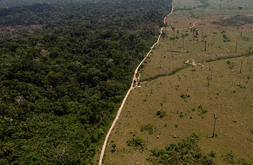 deforestration The planet's forests are under threat some 36 football fields of forests are hacked, burned, and destroyed every minute with each forest clearing, we lose about 135 species of animals, plants.