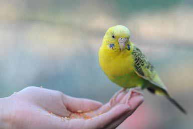 Holding birds