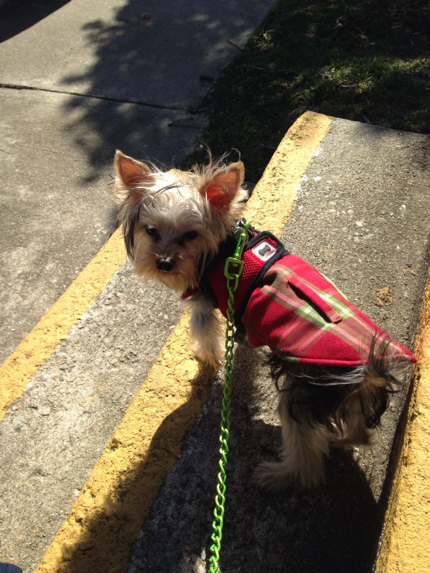 On the way to the park | Carter My Yorkie | Dog food recipes