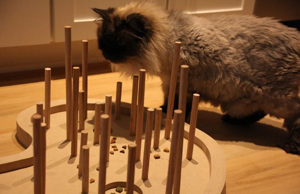 Find This Pin And More On Diy Cat Projects