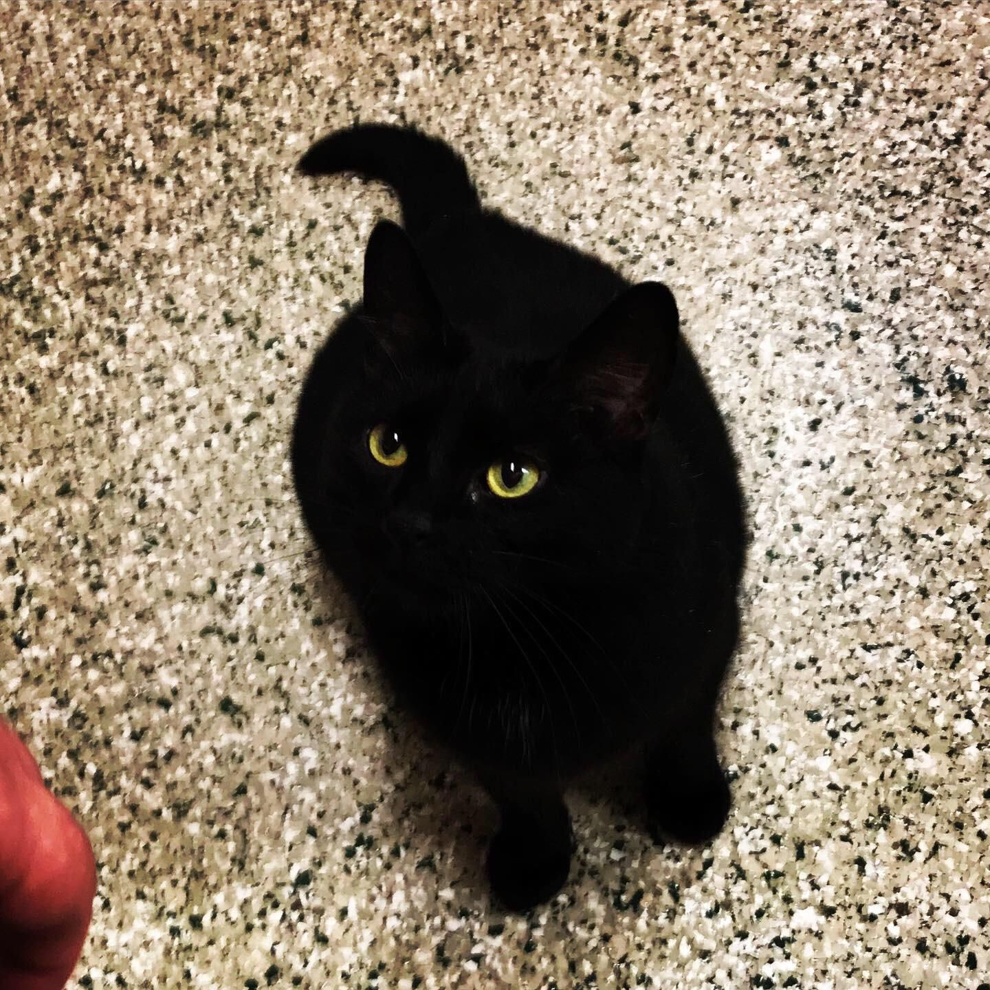 This Is My Little Miss Void Twilight Black Cat Aesthetic Cats And Kittens Cats