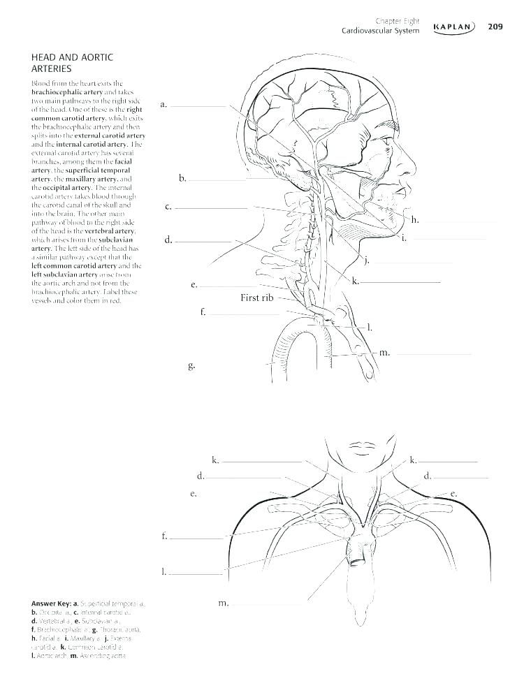 100+ EPIC Best Anatomy Physiology Coloring Workbook Answer