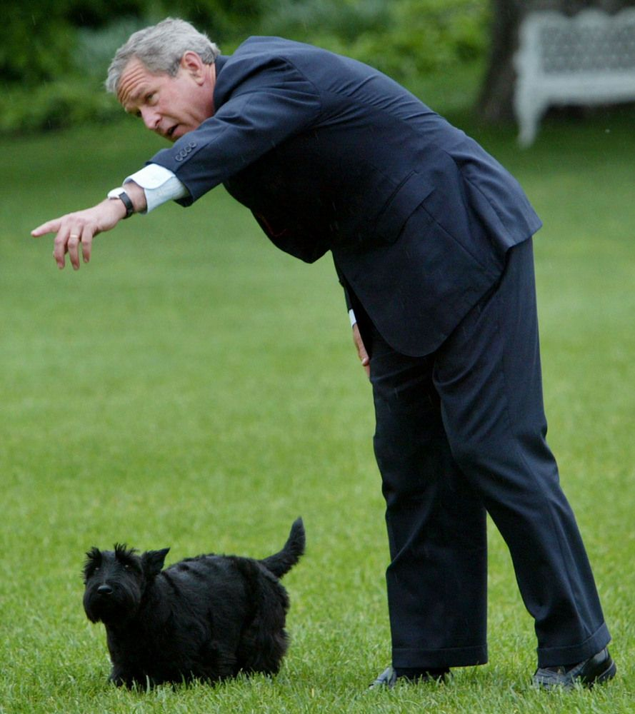 Bush Dog Dies Scottish Terrier Scottie Dog Terrier