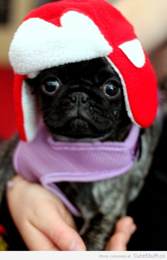 0c2c236e7ec Perfect pug hat for keeping those ears warm!