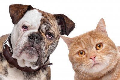 Dog Chasing Cats? How to Modify the Natural Instinct to Chase | The Dogington Post