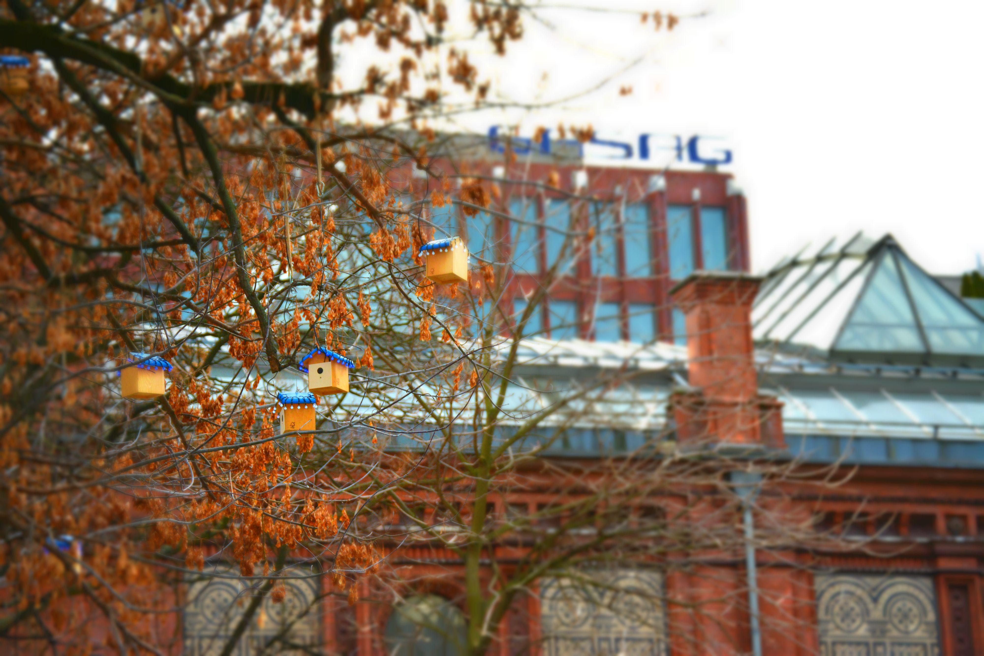 The birdhouse tree in Berlin, Germany