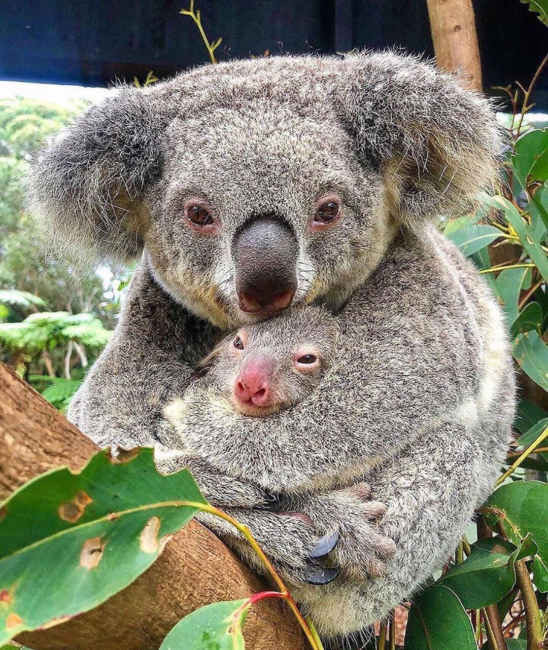 HOME & FAMILY Cute animals, Cute baby animals