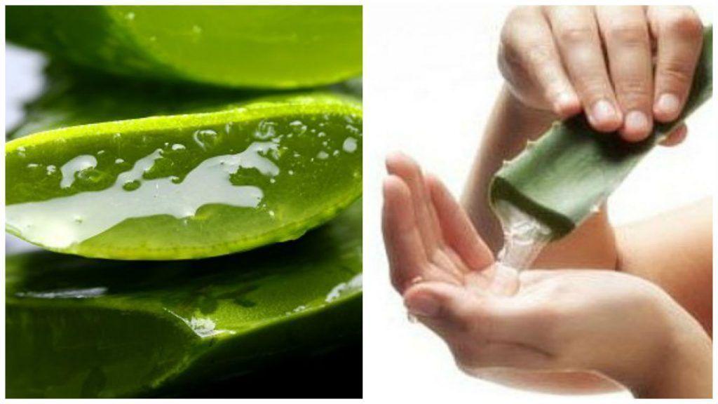 18 Usos del Aloe Vera, dejarás de comprar mas de un producto gracias ...