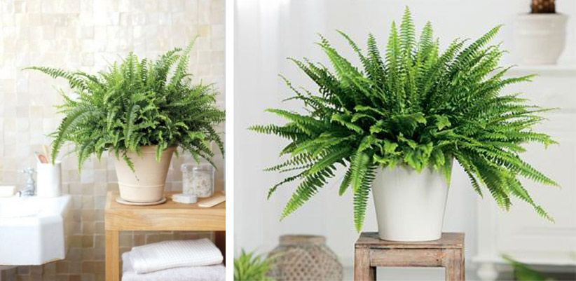 Decoracion con plantas de interiores buscar con google - Decoracion de intriores ...