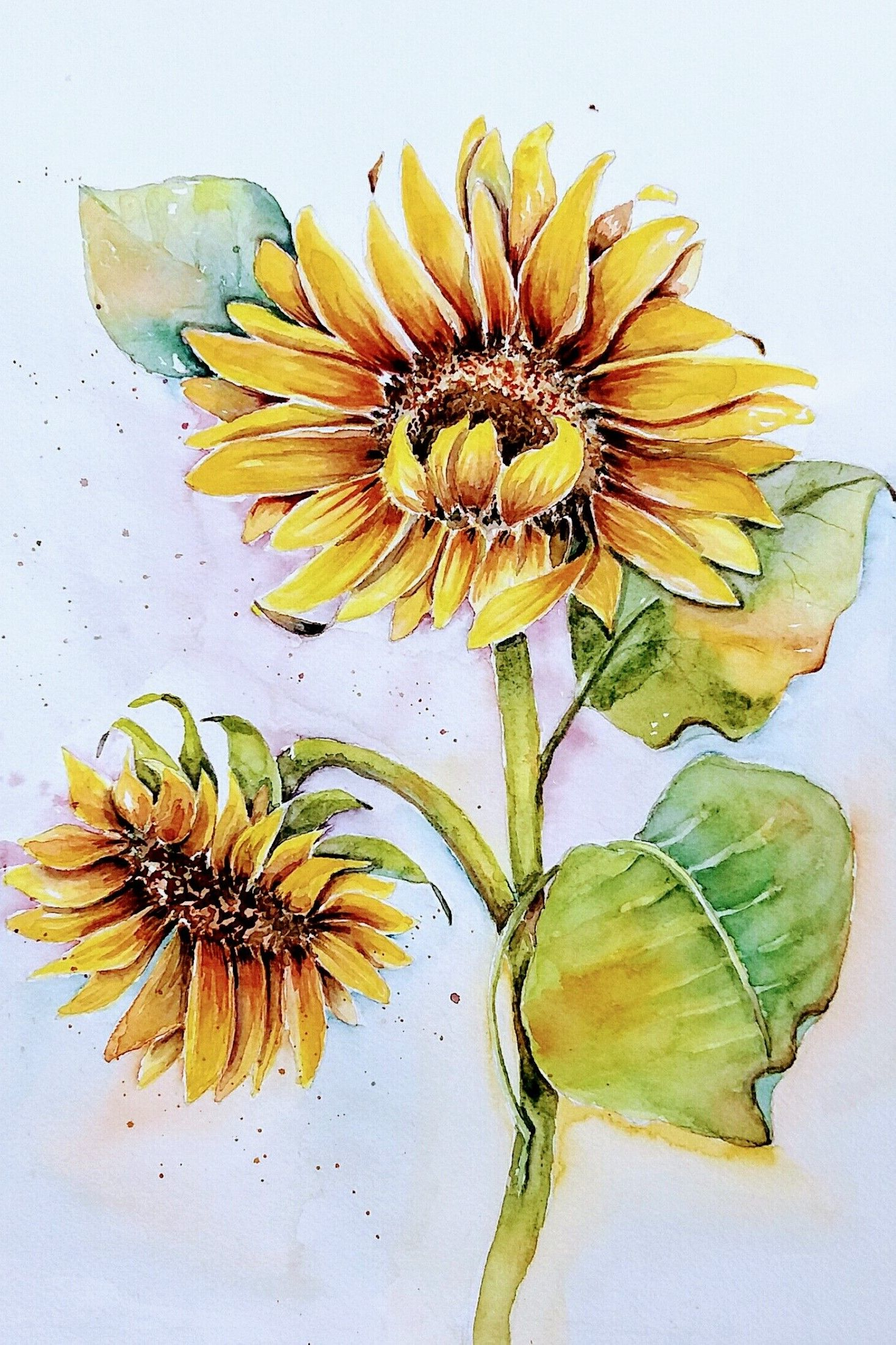 Aquarell Sonnenblume Watercolor Sunflower Aquarell Sonnenblumen