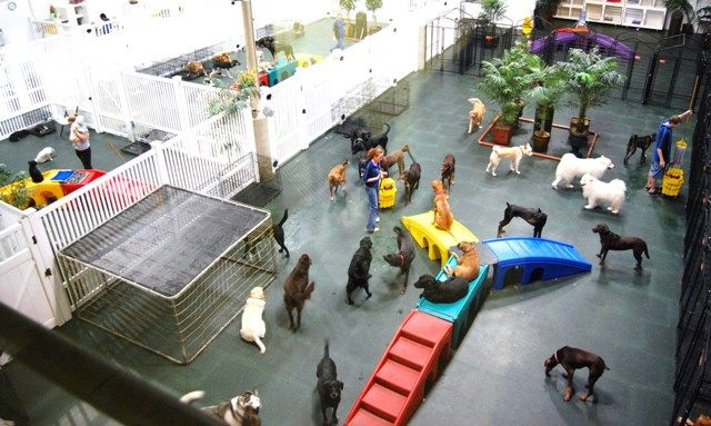 Indoor Doggie Day Care Google Search Dog Heaven