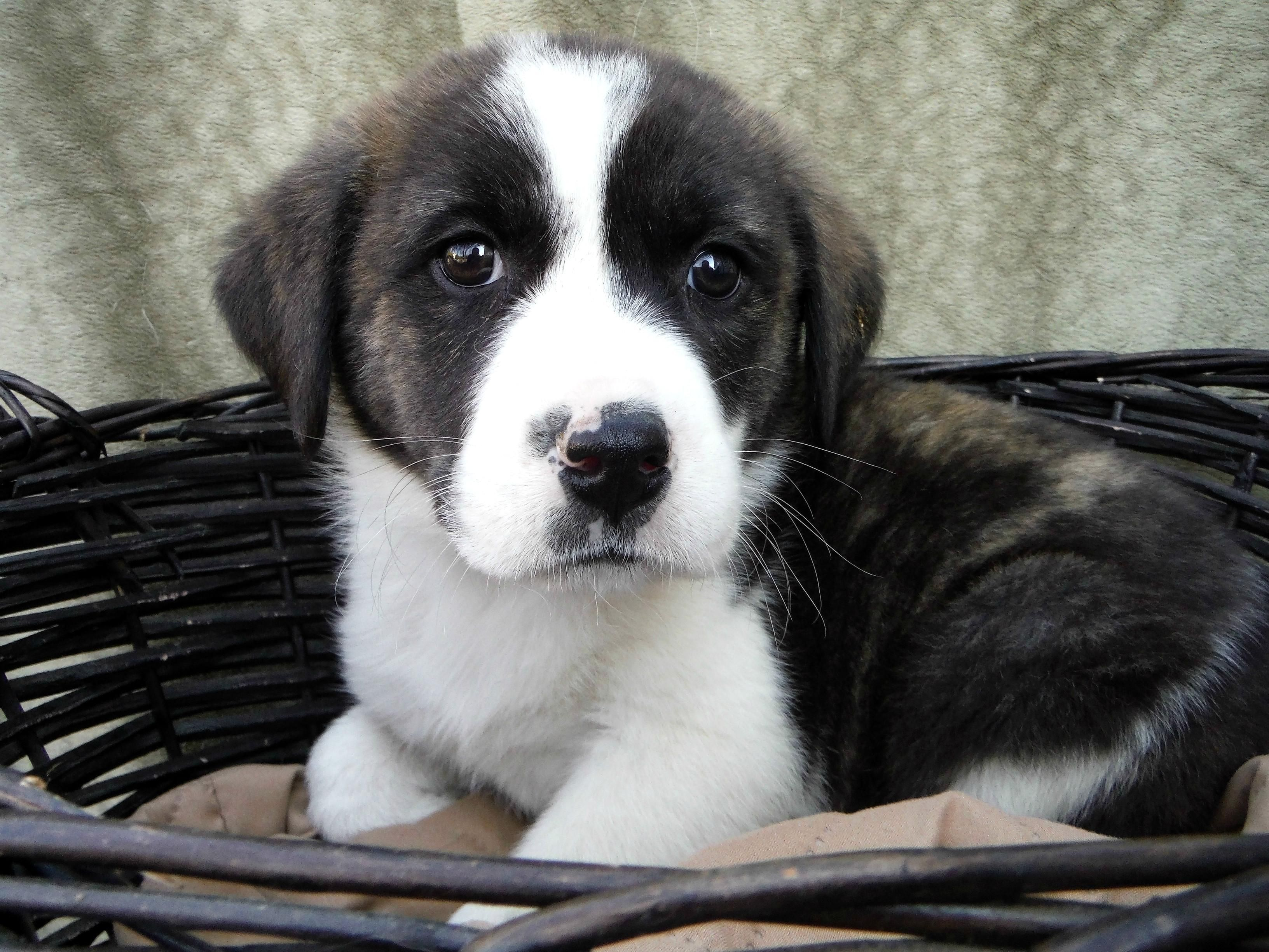 Pin on Pups for adoption