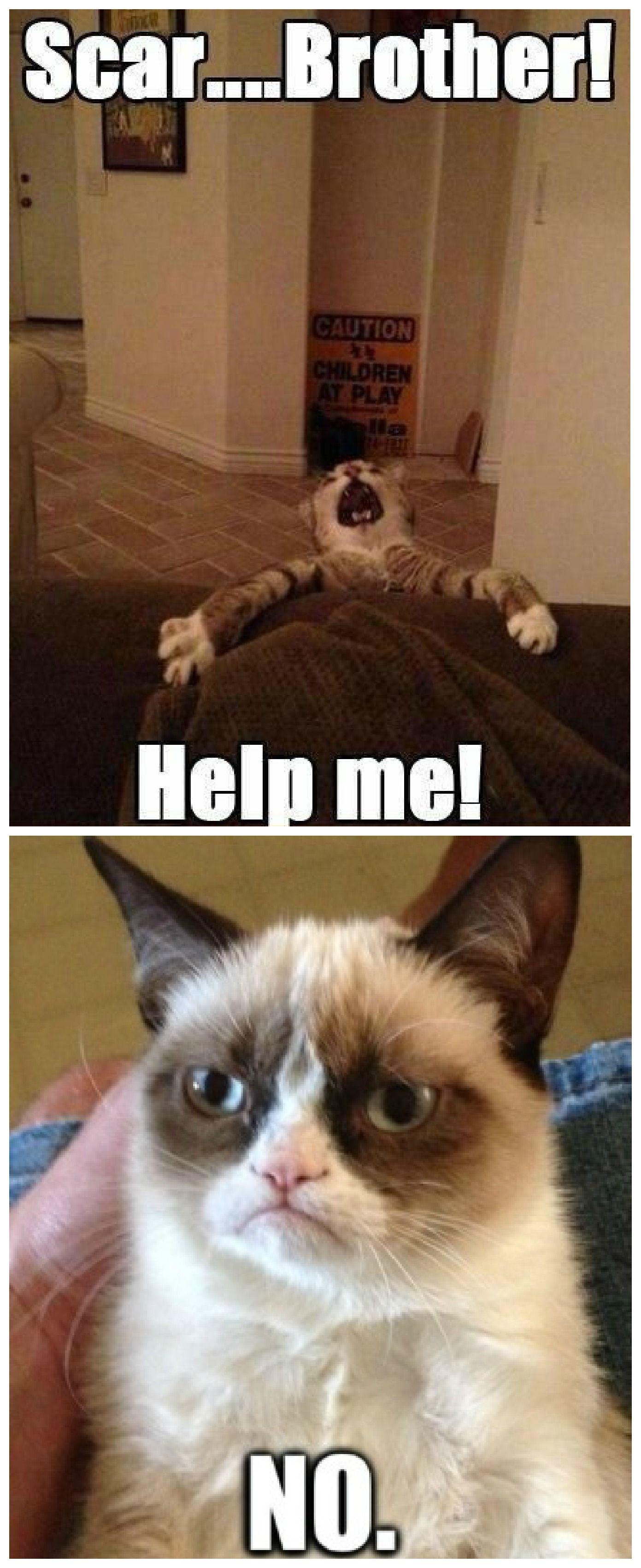 Funny Grumpy Cat Christmas Memes.Lion King Vs Grumpy Cat Giggles Funny Grumpy Cat Memes