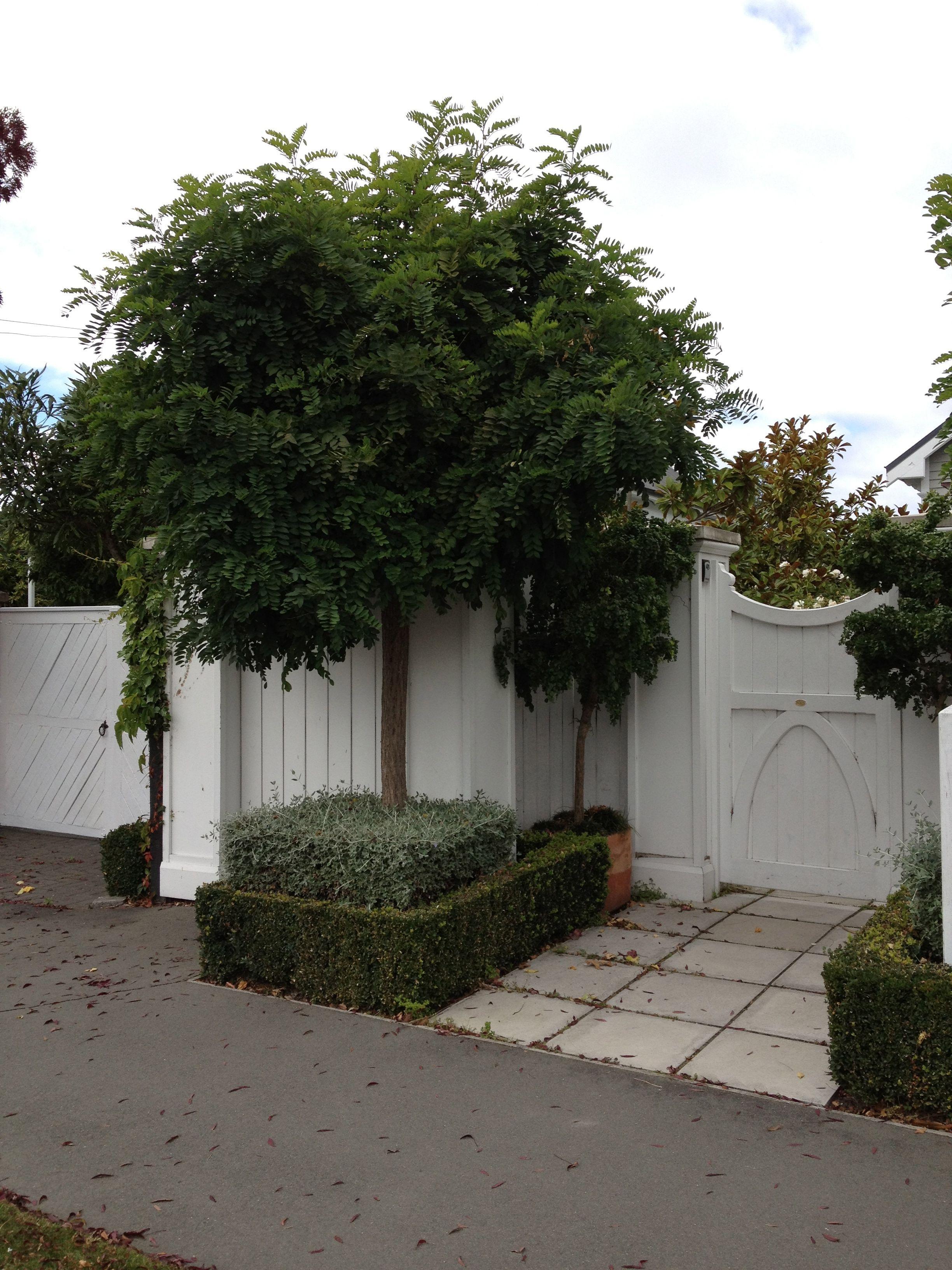 Garden trees for screening  Formal Garden tiered hedge  Gardens  Pinterest