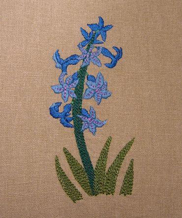Hyacinth | Flickr - Photo Sharing!