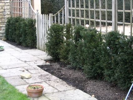 Example Of Yew Hedges That Don T Work Flower Bed Designs 400 x 300
