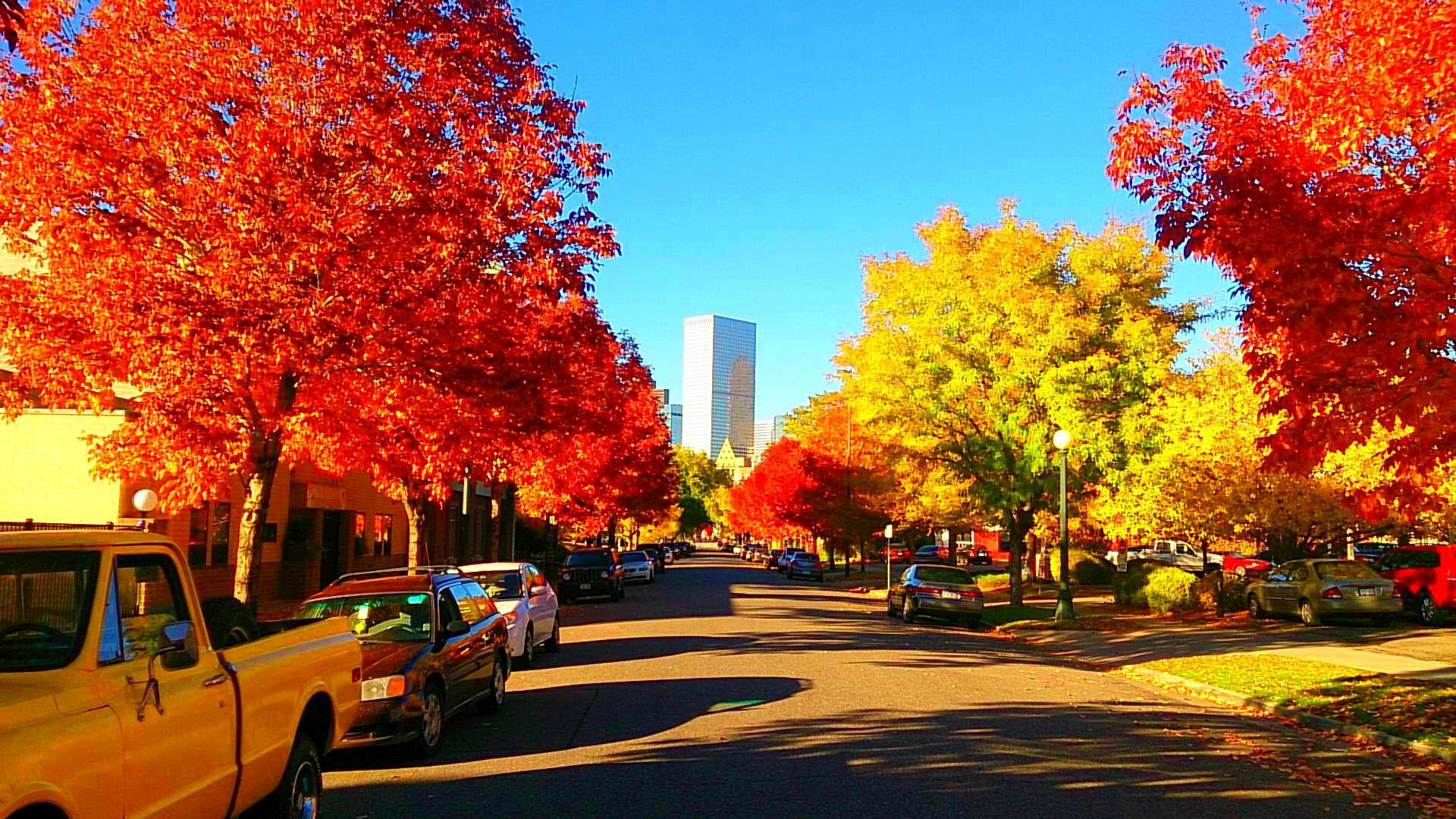A Golden Triangle Fall. An Urban Denver Photograph By Heather Somerville. #denve #liveurbandenver #denvervibe