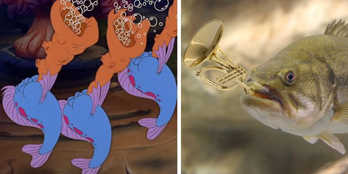 Real fish versus little mermaid fish mermaid and fish for The little mermaid fish