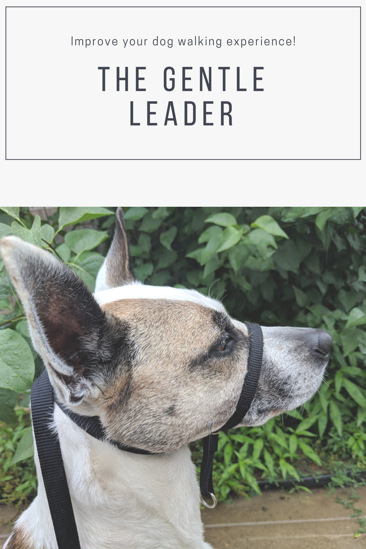 The Gentle Leader Is A Better Safer Way To Walk Dogs Of All Sizes It Is Helpful In Controlling Your Dog And Stopping Pulling It Gentle Leader Pets Your Dog