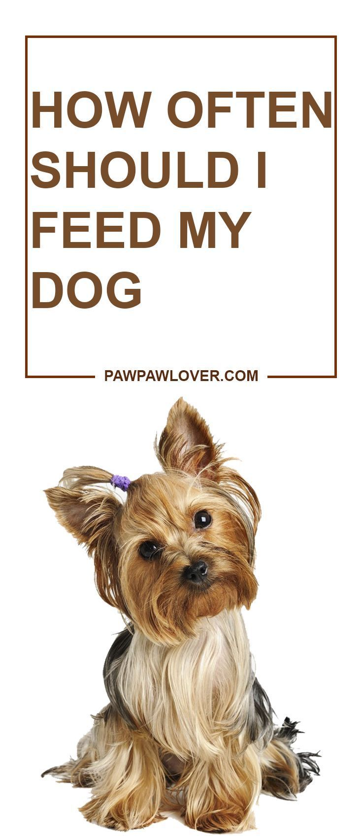 How Often Should I Feed My Dog? [2019 Updated] Ultimate