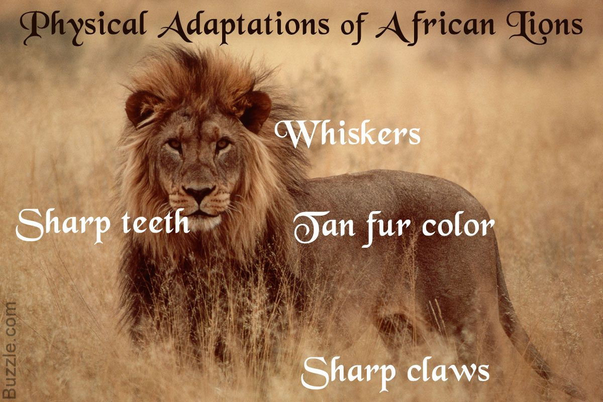 Amazing Physical And Behavioral Adaptations Of African