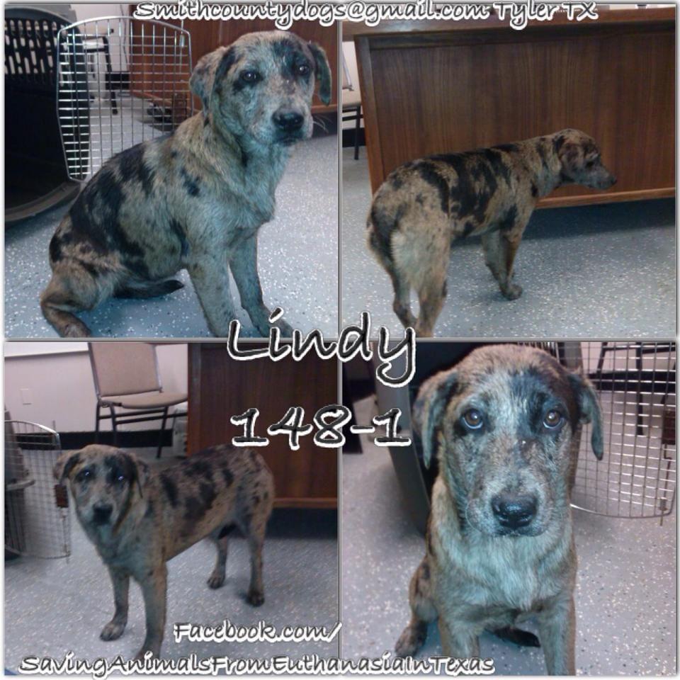 01/25/15SUPER URGENT Saving Animals from Euthanasia in