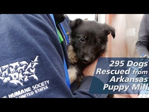 Puppy mill rescue brings 51 dogs to Great Plains SPCA