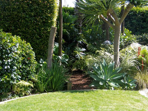 nz tropical garden native Google Search Garden Pinterest