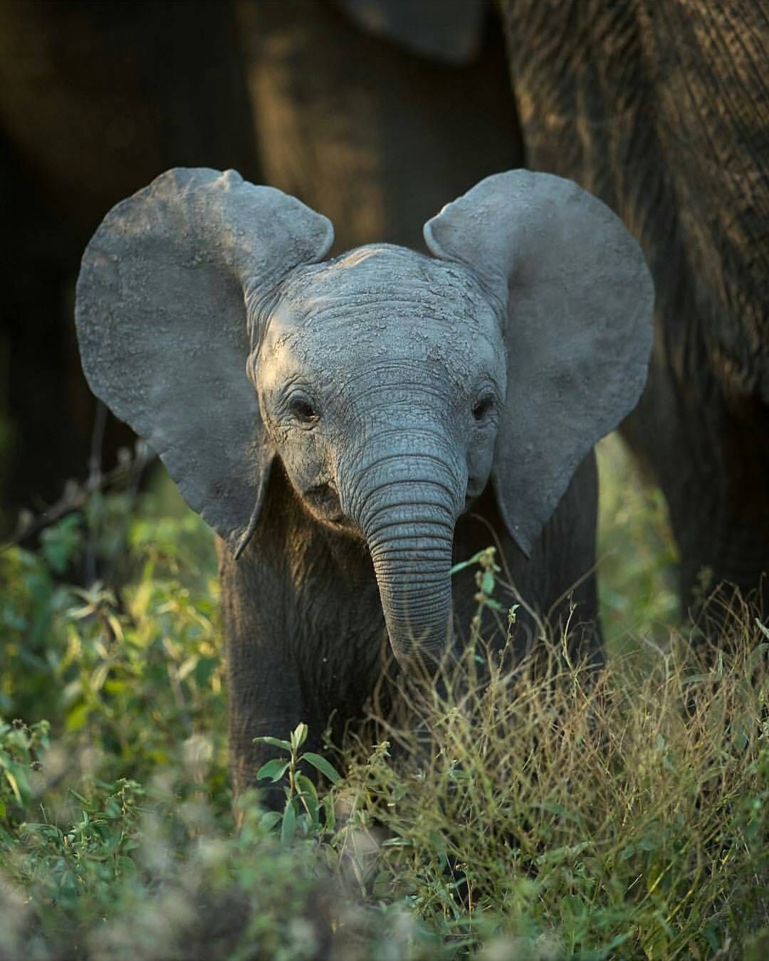 Little Big Ears Photo By Marlondutoit Thisissouthafrica Cute