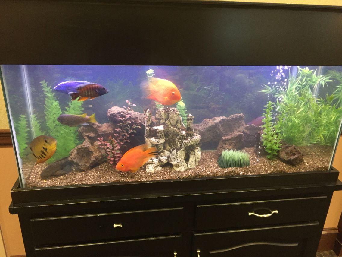 Freshwater aquarium fish gobiidae - Fresh Water Aquarium With Awesome Fish