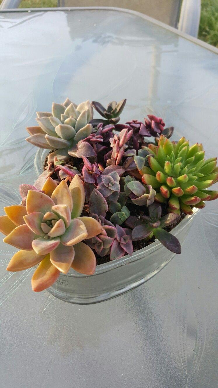 My 1st Succulent Arrangement 4 23 17 Plants From Home Depot Planting Flowers Succulents Plants