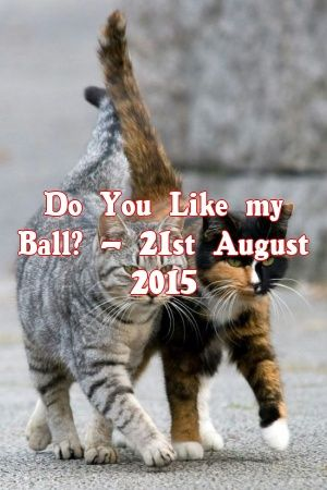 Yvonne Gill Tells About Do You Like my Ball? – 21st August 2015   #catbreeders  #cats  #cute  #love  #lovecats  #fluffykittens  #catcondo  #Patterns