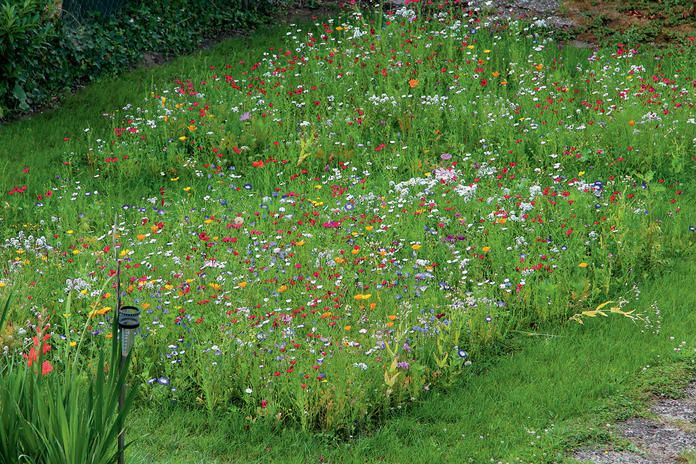 Photo of It's getting colorful: How to create a flower meadow