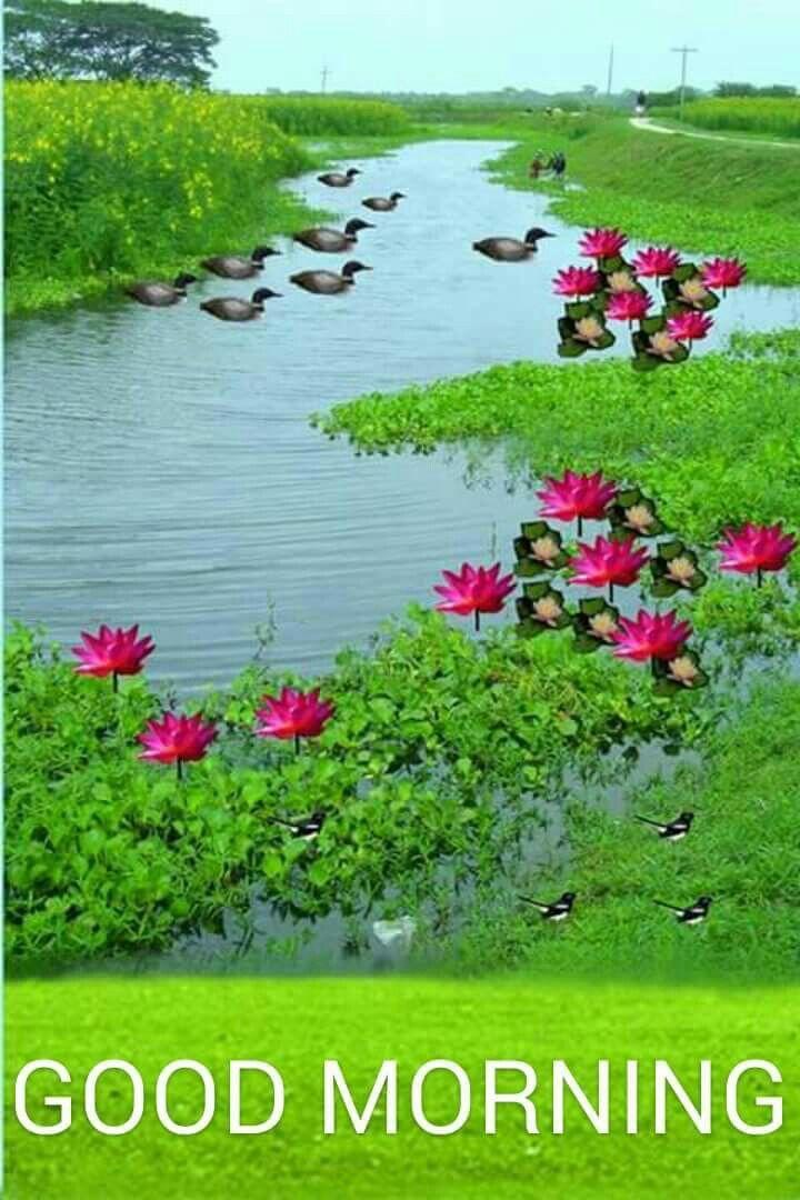 Good Morning Good Morning Flowers Good Morning Greetings Morning Greeting