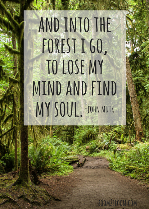 John Muir Nature Quotes To Inspire Boom2bloom Com Forest Quotes Soul Quotes Nature Quotes