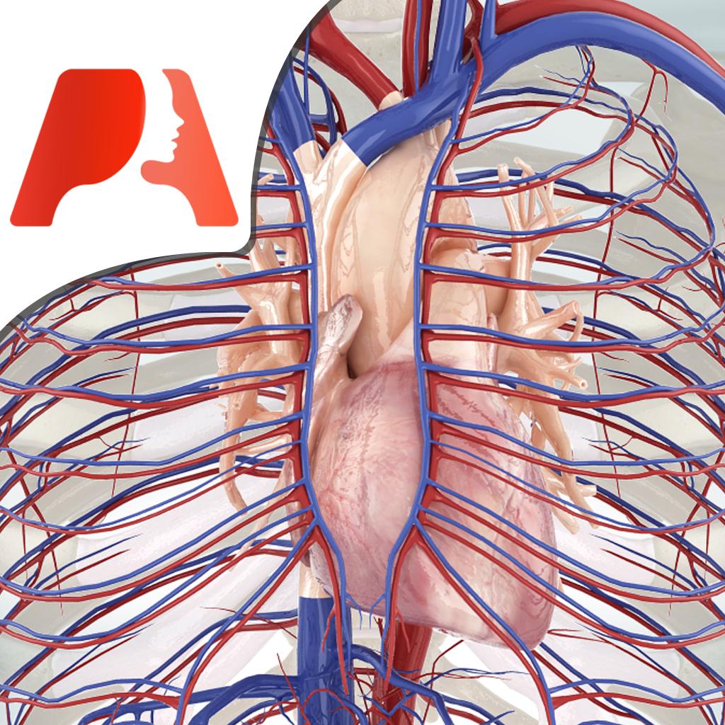 Pocket Anatomy Circulatory Pocket Anatomy Circulatory Permits The