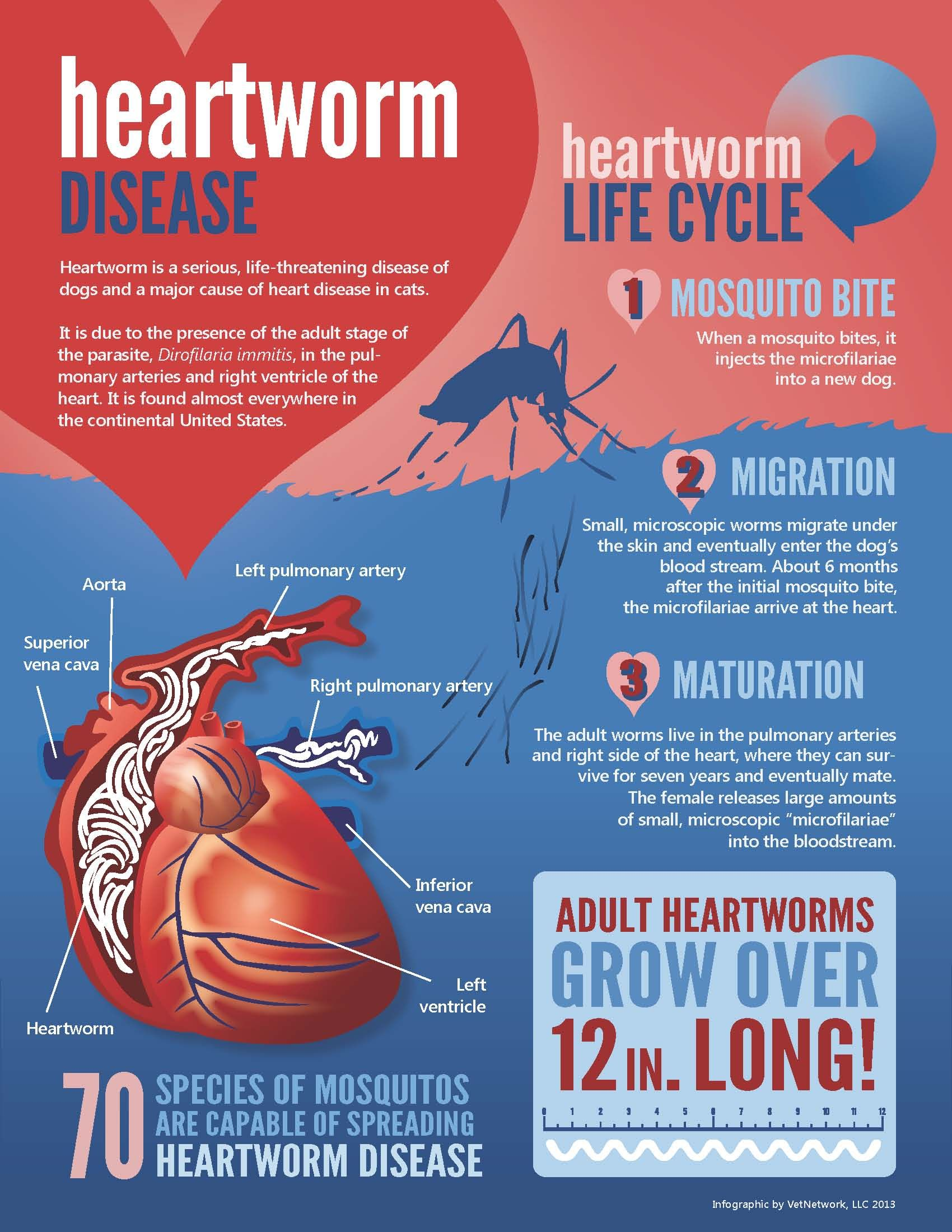 All about heartworm Vet medicine, Heartworm prevention