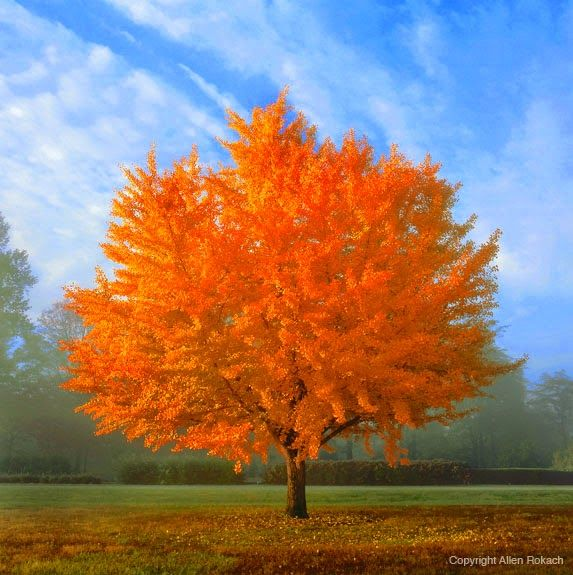 This Mid Sized Landscape Tree Has Exceptional Fall Color Not Thinking You Need Another Back There But One Would Be A Great