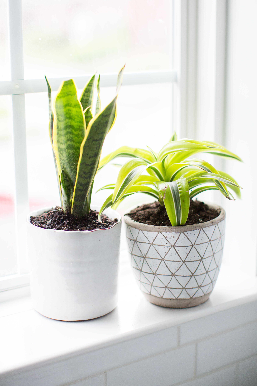 10 Best Plants For The Bathroom In 2020 Badezimmerpflanzen Pflanzen Coole Pflanzen