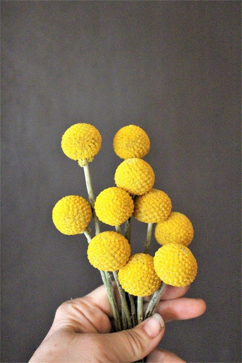 billy balls flower seeds