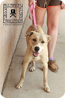 Pin By Lisa Jl Coffman Barker On Shelter Animals Plott Hound