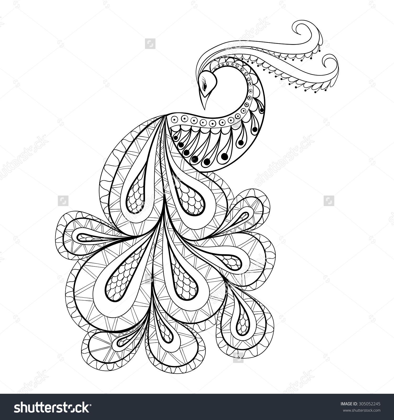 Paisley Peacock Drawings