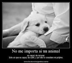 Frases Bonitas Amor A Los Animales Critters Puppies Cute