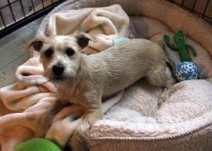 Adopt Caitlyn On Terrier Mix Dogs Parson Russell Terrier Terrier