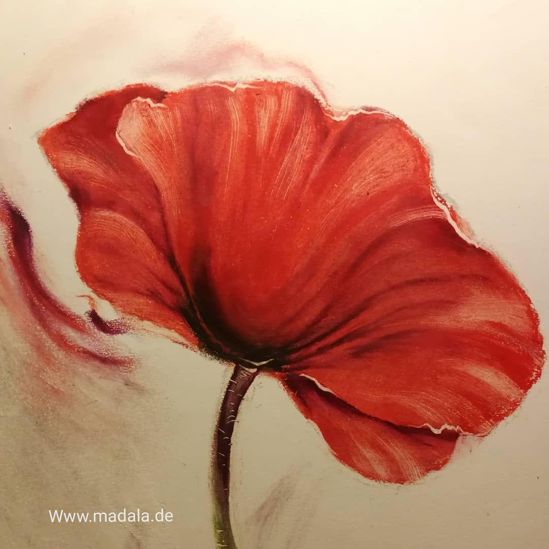 Pin Von Beatrix Schmid Auf Acryl Blumen In 2020 Stillleben Blumen Mohn Mohnblume